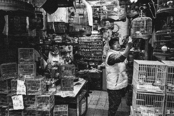 mercato degli uccelli a Hong Kong_00018